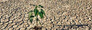 Tra la siccità e le inondazioni: rischio, disastro e gestione dei danni nel mediterraneo spagnolo (XVIII secolo)