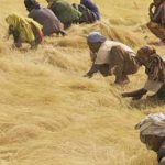 Ethiopia: ethnicity, federalism and antiquity