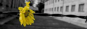 Venti anni di Giorno della Memoria: bilanci e prospettive.